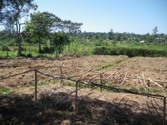 整備されたマシワ小学校内の農地(2007年)